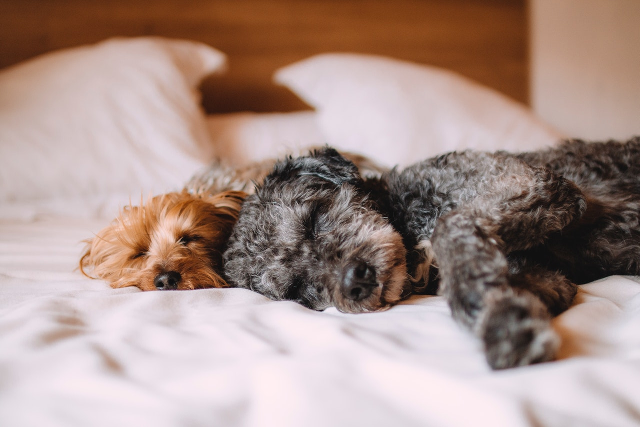 How to Spot the Signs of Fleas on Your Pets